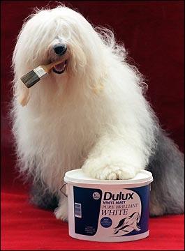 shaggy-dulux-dog