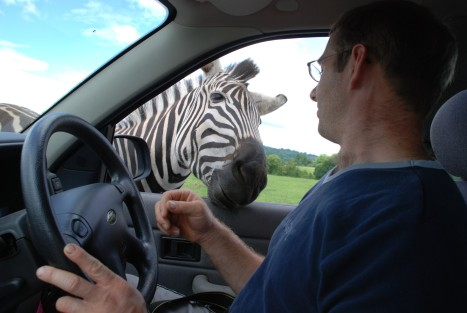 inquisitive-zebra